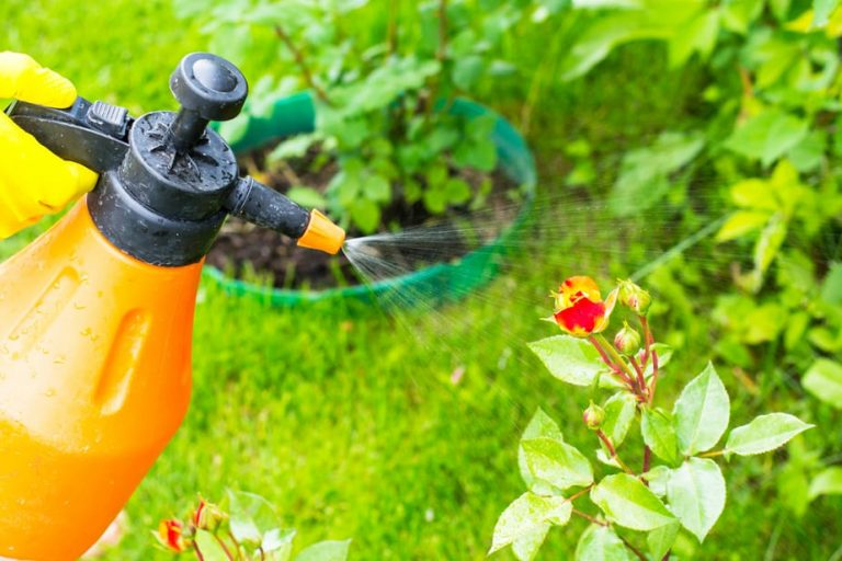 What Are Natural Pesticides